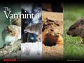 Varmint 4 Wallpaper